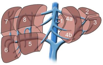 Segmenti di fegato - ILLab258