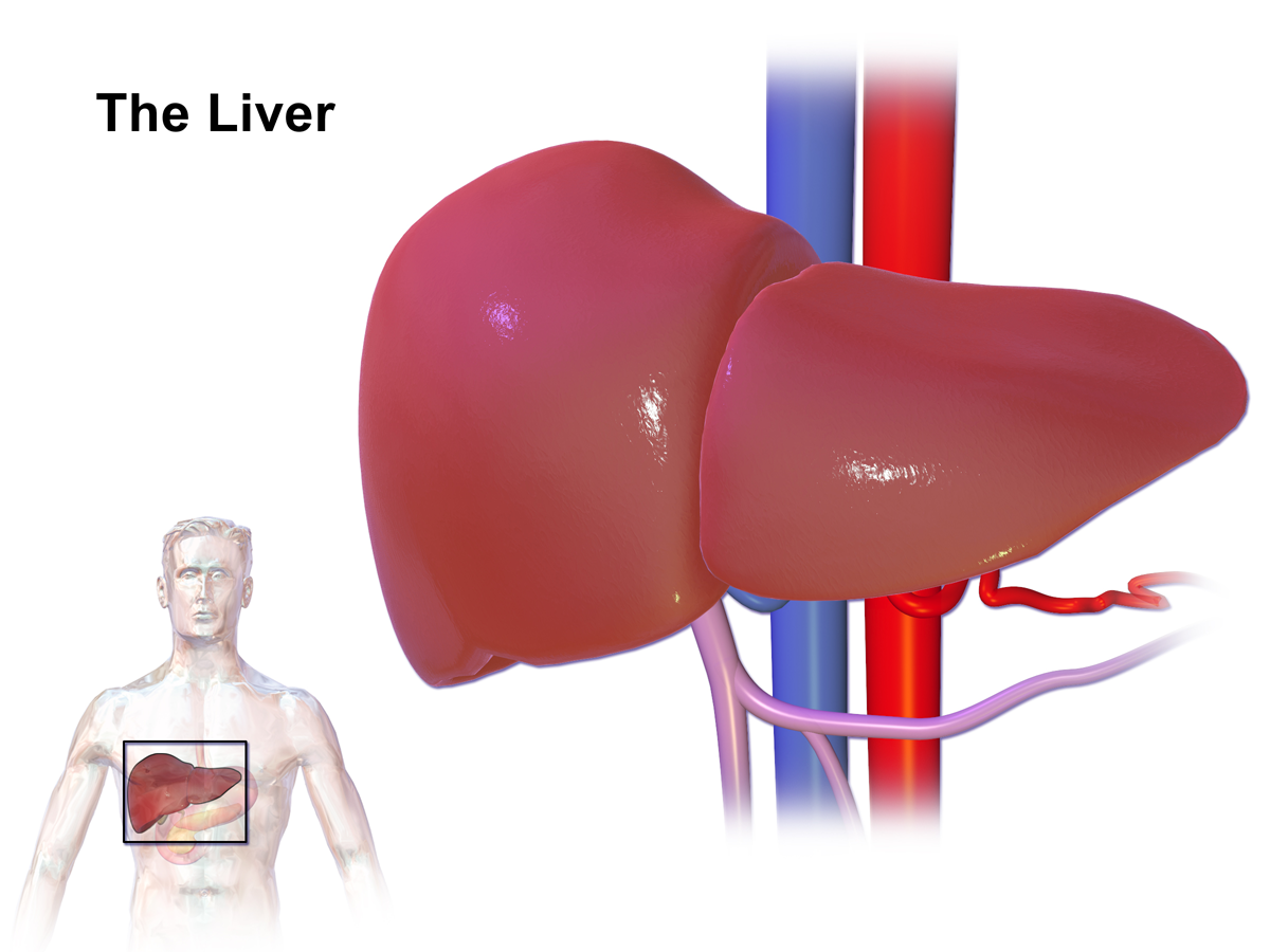 Transplant Surgery Hepatitis B