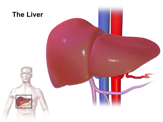 Transplant Surgery - Alcoholic Liver Disease